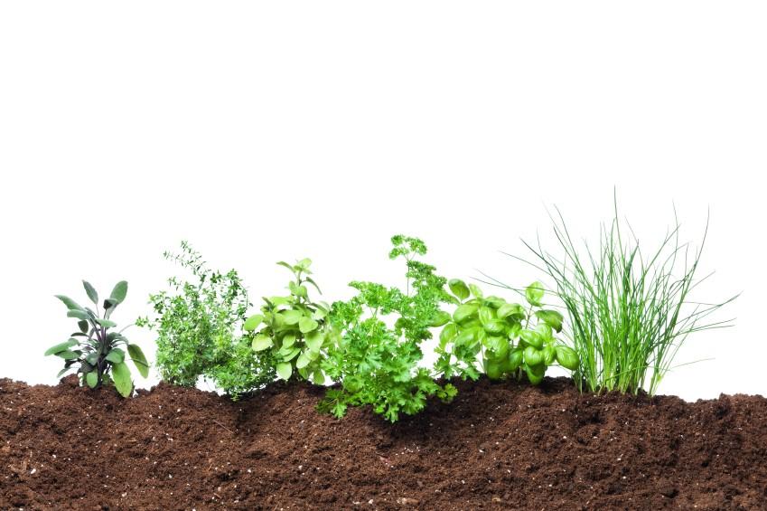 Nitrolized soil amendment Soil amendments for vegetable garden